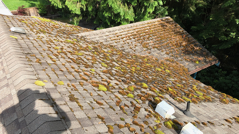 roof cleaning maple ridge